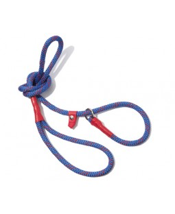 All-In-One Collar & Leash - Blue