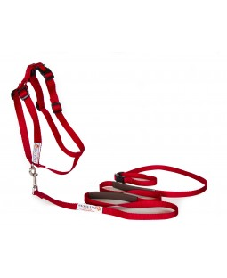 Walk In Sync Training Harness & Lead - Red